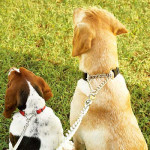 dog-training-collars