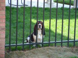 dog fences use